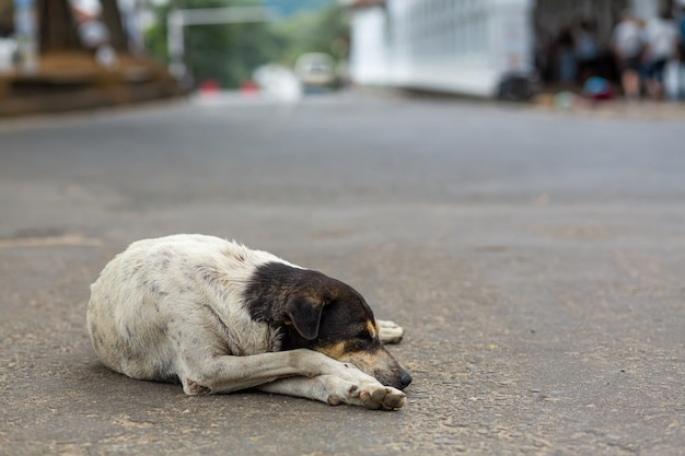 A portrait of a homeless dog lies in the middle of the street.