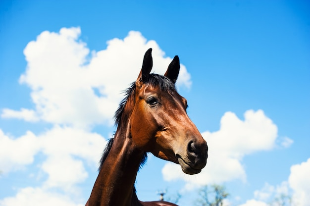 Portrait of a horse on blue sky