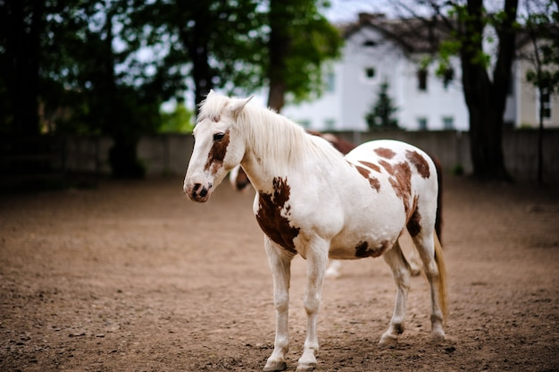 Portrait of a horse s