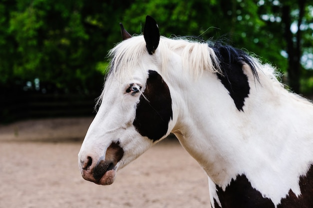 Portrait of a horse with beautiful unusual blue eyes