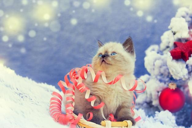 Portrait of a little cute kitten entangled in christmas streamer