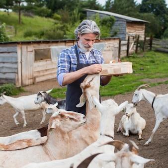 Portrait man feeding goats