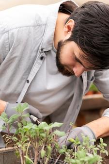 세로 남자 성장 식물