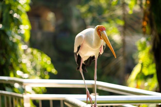 Portrait of milk stork on a fence