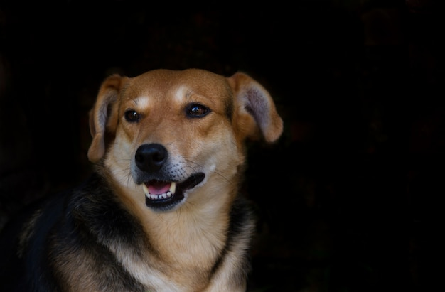 Portrait mongrel stray dog on dark background