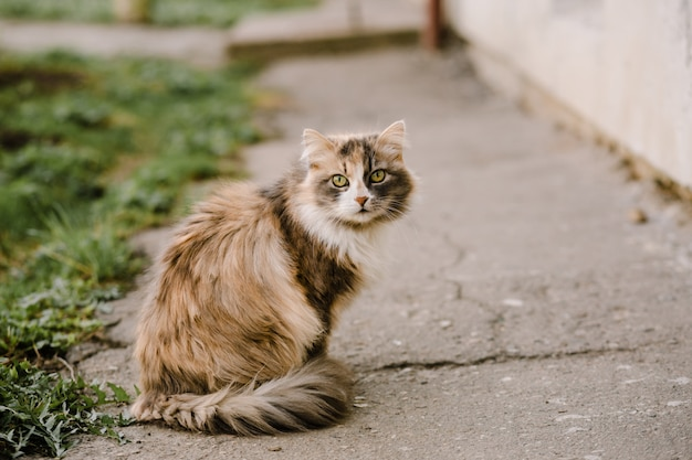 Portrait of multicolor cat with green eyes