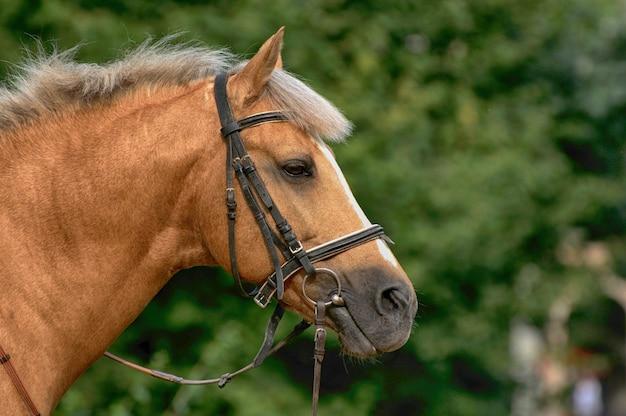 Portrait of nice brown horse.