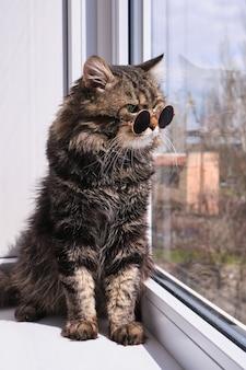 晴れた暖かい日に窓辺に座っている小さな暗いサングラスで愛らしい、ふわふわの灰色の猫の肖像画
