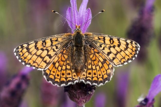 紫色の花の上に座っている美しい蝶の肖像画