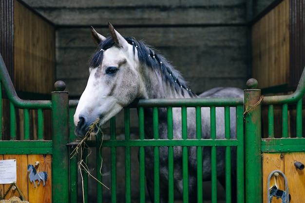 暗い厩舎で美しい悲しい馬の肖像画