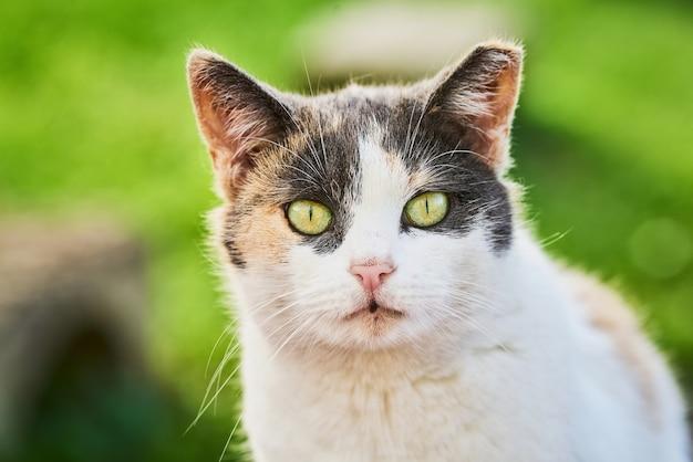 緑の目を持つ美しいぶち猫の肖像画はカメラに見えます
