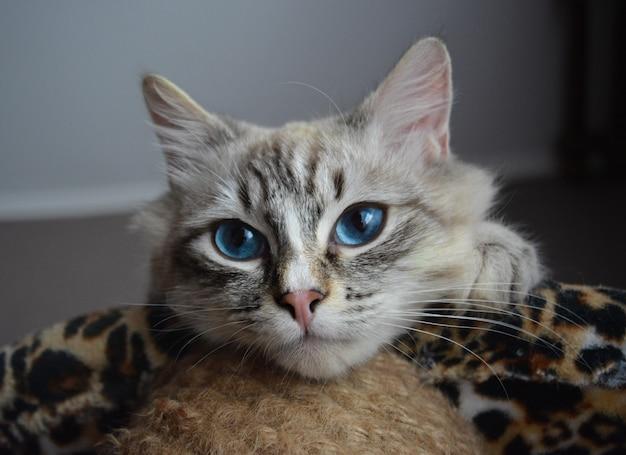 Портрет красивой полосатой кошки