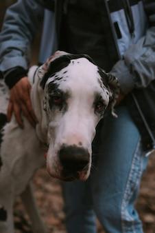 Портрет большой собаки в лесу