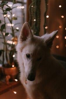 家で遊ぶ大きな犬の肖像画