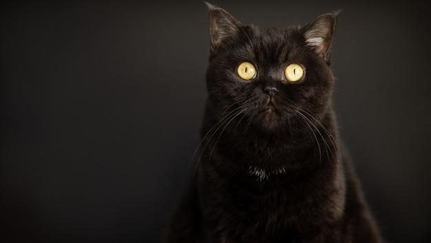 Портрет черной кошки крупным планом на черном
