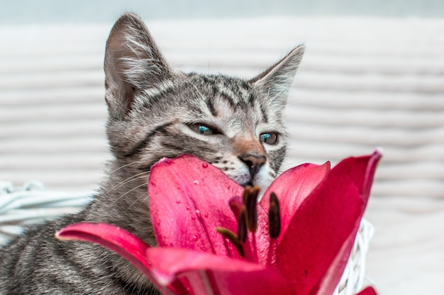 Портрет кошки и крупным планом цветок на белом фоне