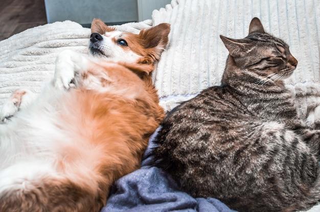 Портрет кошки и собаки, лежащей в объятиях на кровати в квартире крупным планом. концептуальные животные в доме
