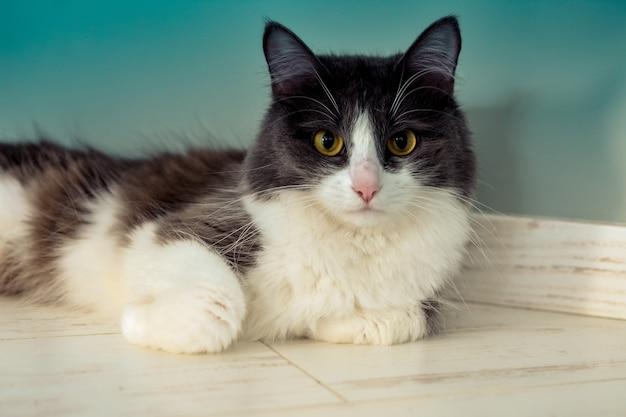 Портрет кота, лежащего на полу и смотрящего в камеру