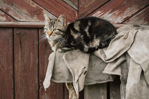 Портрет кота на фоне коричневой деревянной стены