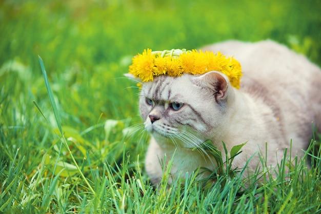 Портрет кота, сидящего в траве, увенчанного венком из одуванчика