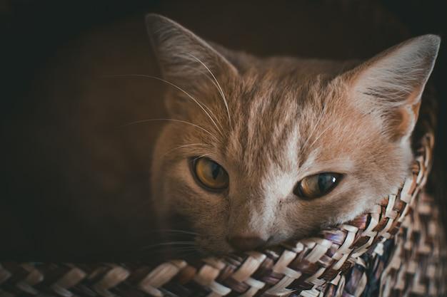가방에서 잠을하려고 고양이의 초상화