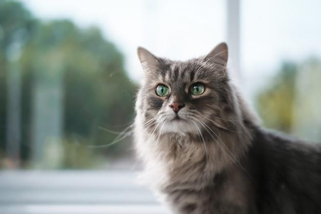 Портрет кота с зелеными глазами