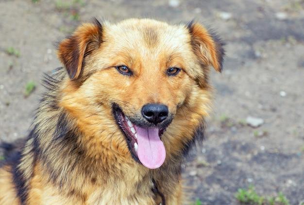 若いふわふわ犬のクローズアップの肖像画