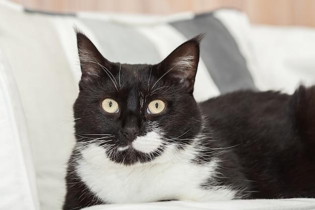 黄色い目を持つかわいい黒と白の長い髪の猫の肖像画