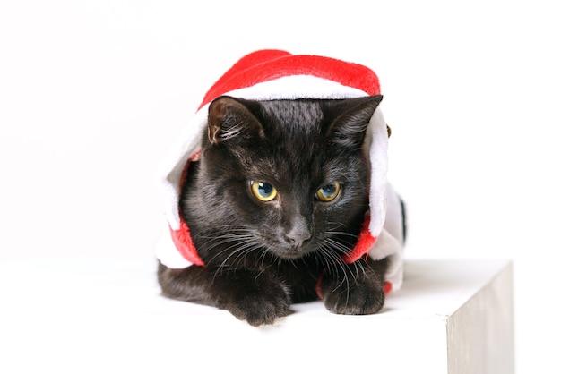 Портрет милого черного кота веселого санта клауса взгляд на белом фоне смотрится с желтыми глазами празднично ...