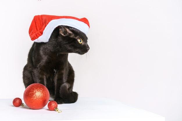 Портрет милого черного кота веселого санта-клауса на белом фоне смотрится желтыми глазами на фестивале ...