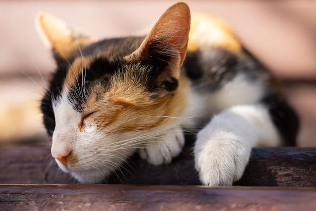 Портрет милой кошки