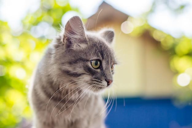 Портрет милого пушистого серого котенка в саду на фоне дома