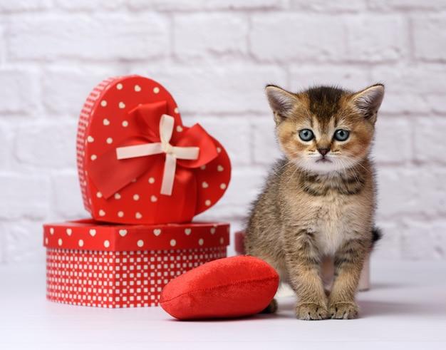 Портрет милого котенка