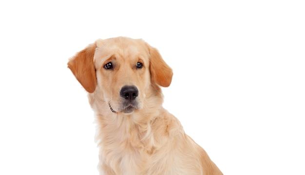 白い背景で隔離のかわいい実験犬の肖像画