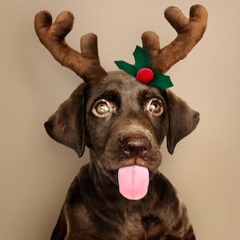 Portrait of a cute Labrador Retriever puppy wearing a Christmas reindeer headband