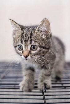 Портрет милый маленький серый полосатый котенок