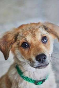 床に座っているかわいい混合ゴールデンレトリバーの子犬の肖像画。