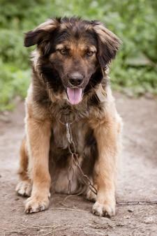 Портрет собаки в макро на фоне природы