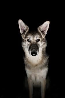 夜の野原で犬の肖像画