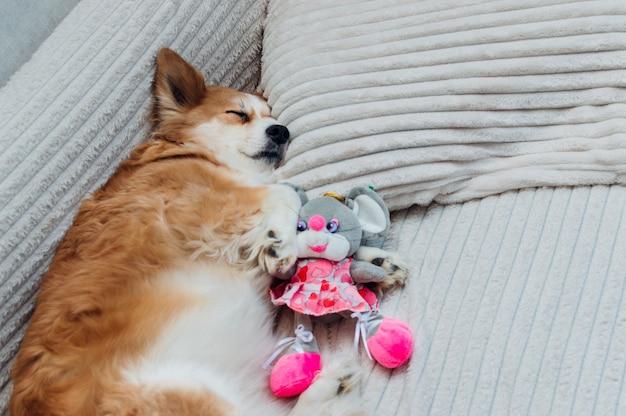 침대 클로즈업에 강아지의 초상화입니다. 개는 베개에서 자고 있습니다. 강아지는 장난감을 가지고 잔다
