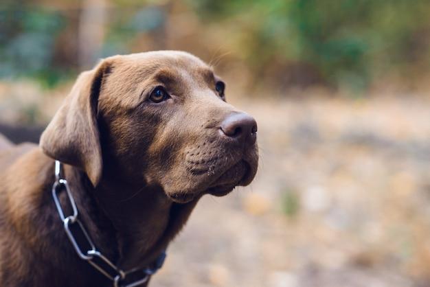 屋外の犬の肖像画