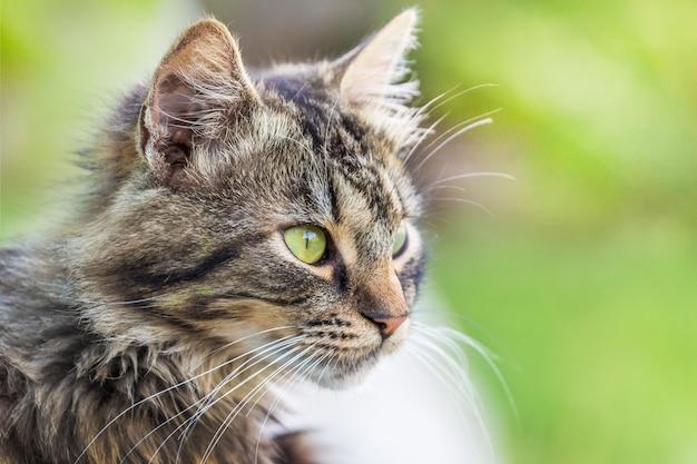 ふわふわの縞模様の猫の肖像画