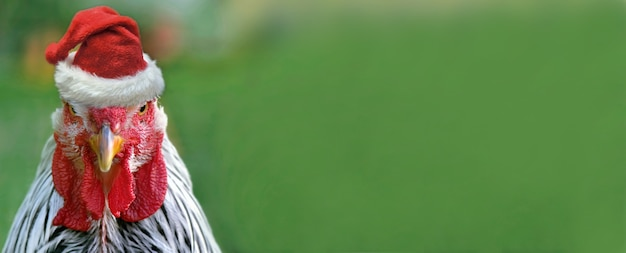 緑の背景にサンタクロースの帽子をかぶった面白いオンドリの肖像画