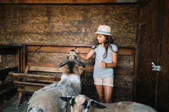 Portrait of a girl touching sheep's mouth in the barn