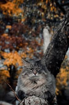 Портрет серого кота на дереве