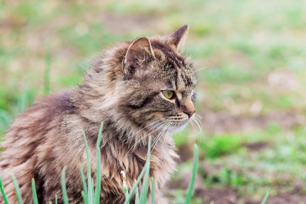 緑の草の背景の灰色の縞模様の猫のクローズアップの肖像画