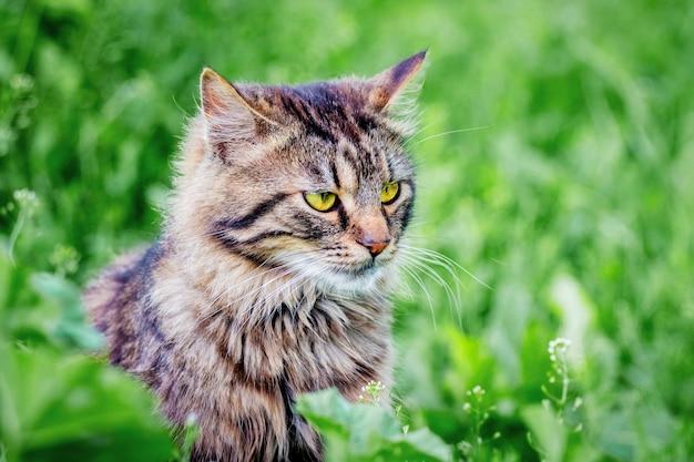 緑の草の灰色の縞模様の猫のクローズアップの肖像画