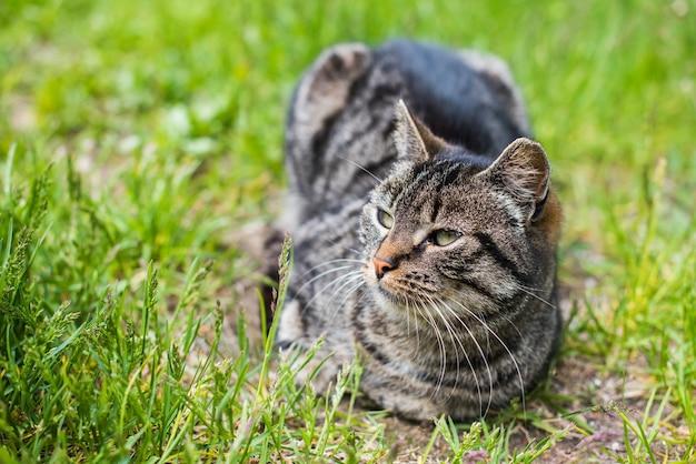 Портрет серого полосатого кота с длинными усами. милый питомец. морда кошки