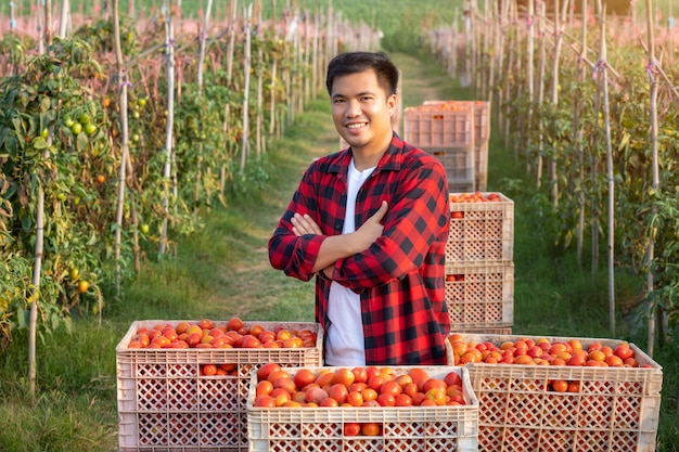 シャツに立って、カメラに微笑んでいるハンサムな若い農夫の肖像画、新鮮な赤いトマトのソース