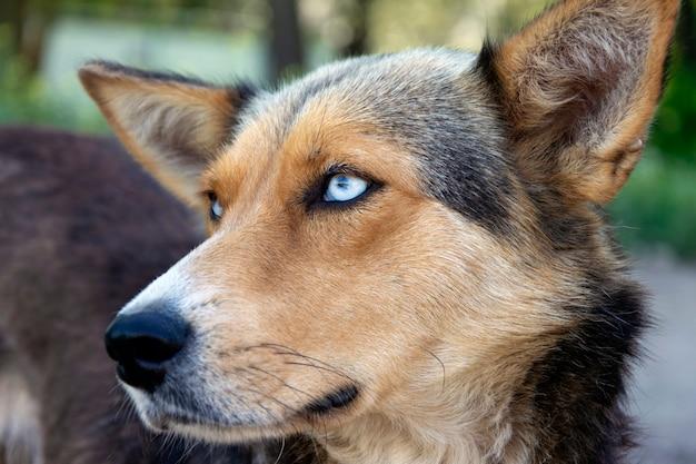美しい青い目をしたホームレスの野良犬の肖像画。